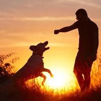 """Phát hiện động trời về """"thần giao cách cảm"""" giữa người và thú"""