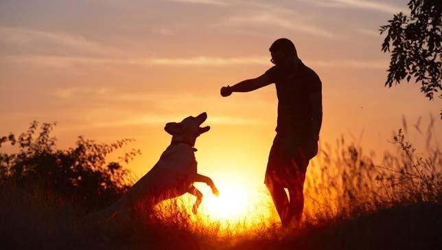 Các loài động vật có những liên kết cảm xúc vào tinh thần với con người.