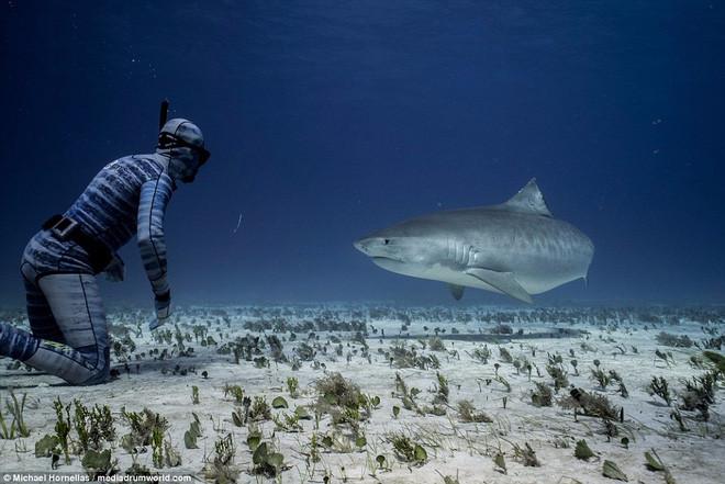 Riley Elliott thách thức cá mập.