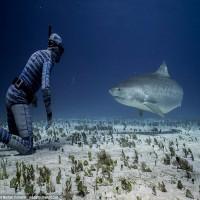 Áo lặn tàng hình: Đi bơi gặp cá mập... chẳng phải sợ!