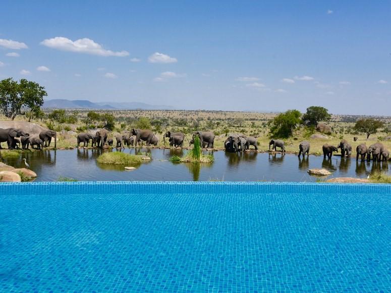 Du khách sẽ có cơ hội thư giãn giữa cái nóng của châu Phi, ngắm nhìn những động vật hoang dã như voi, linh dương, hươu cao cổ, ngựa vằn... đi qua.