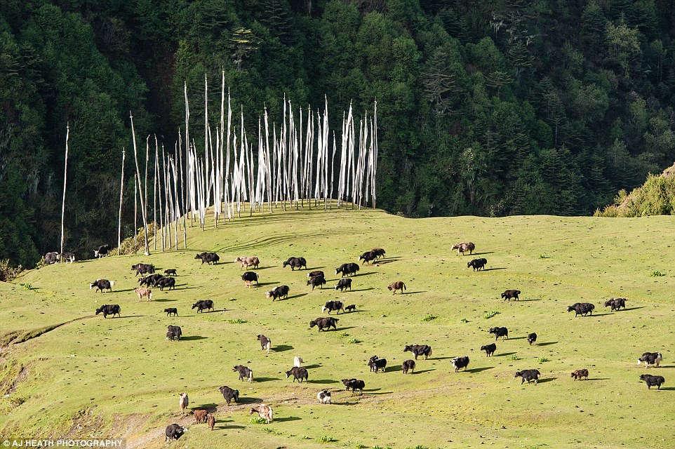 Một con đường mới sắp được xây dựng ở đây sẽ giúp cho cuộc sống của họ thuận lợi hơn, giảm thiểu sự phụ thuộc vào việc nuôi bò yak và cừu.