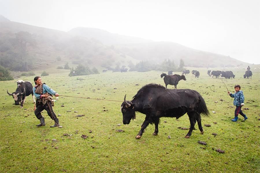 Người Brokpa sống bằng nghề nuôi gia súc vì họ ở vùng đất cao, điều kiện không thích hợp để trồng trọt.