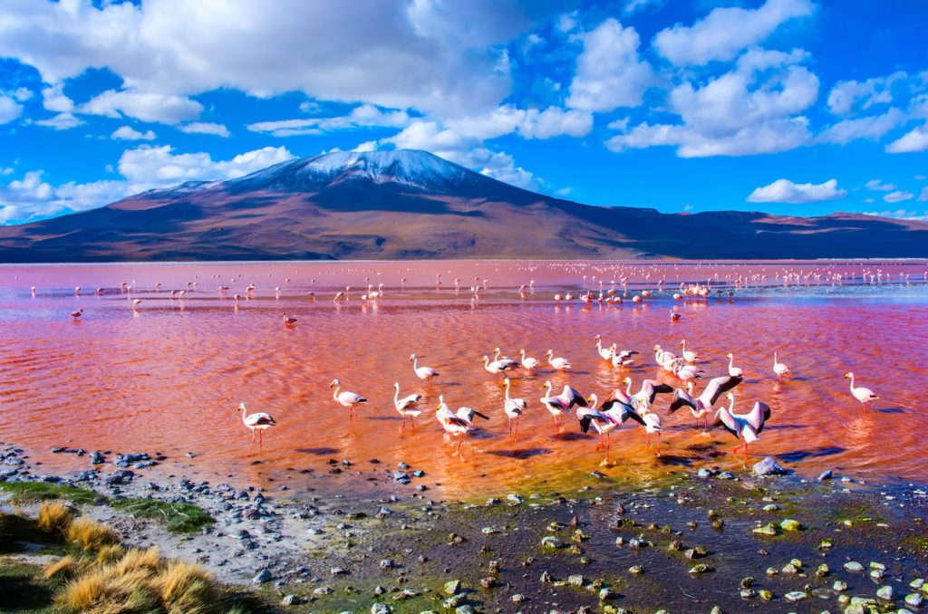 Chim hồng hạc tìm kiếm thức ăn dưới hồ muối giữa sa mạc Atacama ở Chile. Đây là hồ muốn lớn thứ ba trên thế giới.