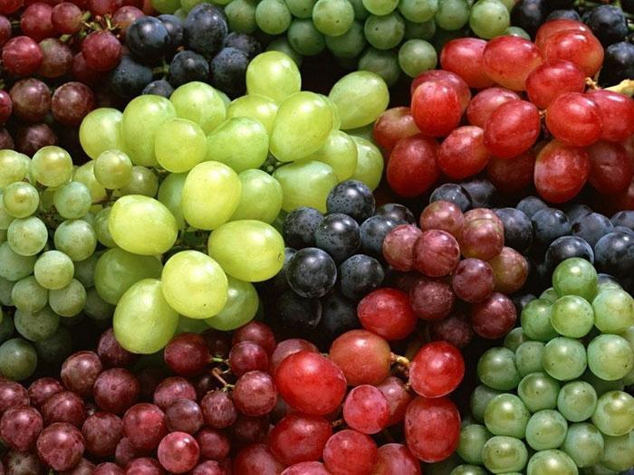 Nho là quả chứa nhiều đường nhất