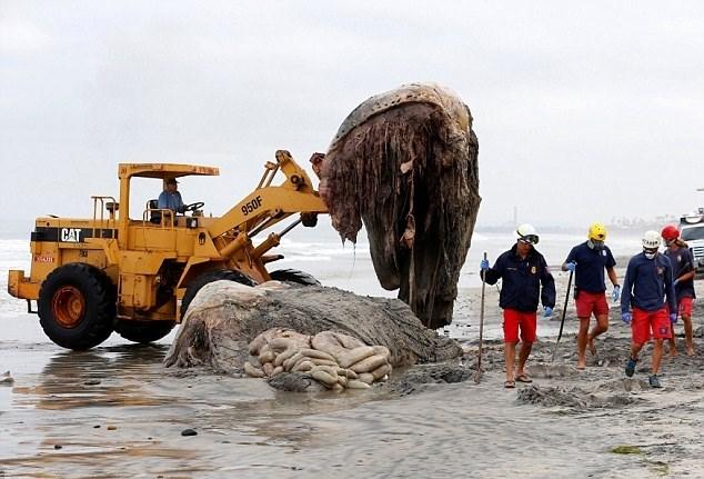 Do bị cắt thành nhiều phần, nội tạng của con cá voi lưng gù xổ hết ra ngoài, nhìn vô cùng đáng sợ.