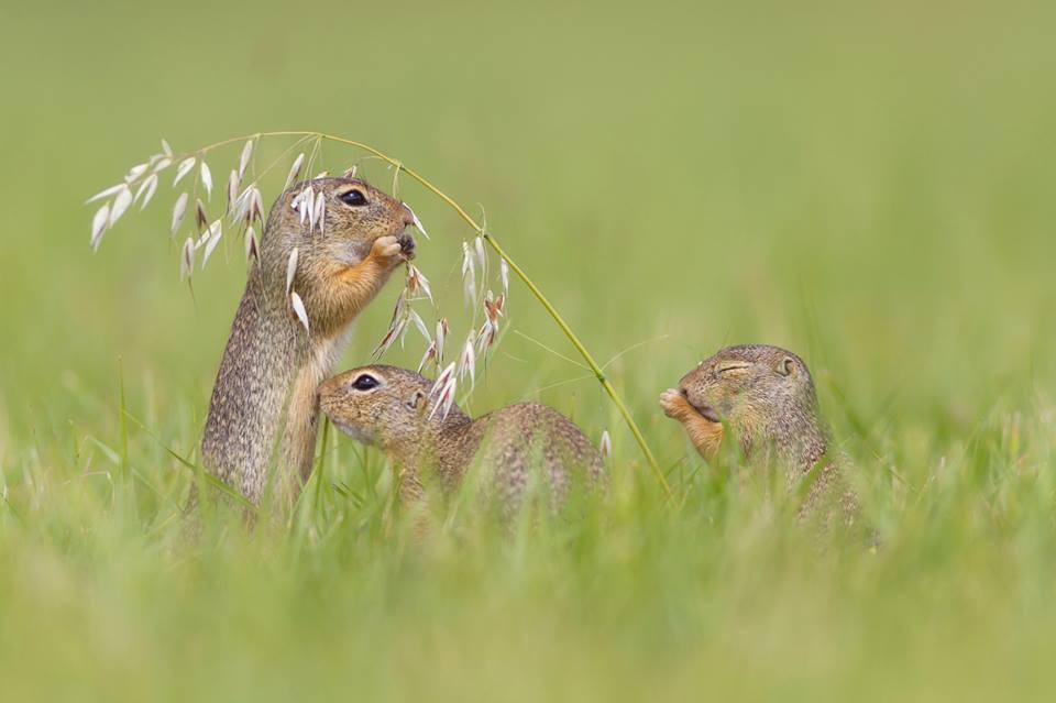 Henrik Spranz là một nhiếp ảnh gia thiên nhiên người Đức hiện đang sinh sống ở Áo.