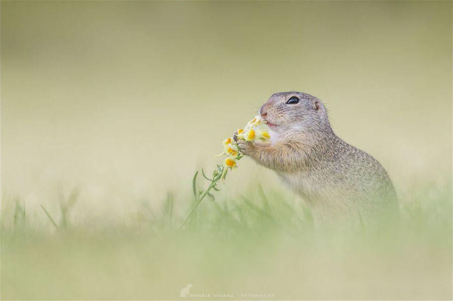 Thức ăn của những con sóc đất bao gồm hạt, lá, rễ, hạt giống, và cây trồng khác. Ngoài ra, chúng cũng bắt và ăn các sinh vật như côn trùng và sâu bướm.