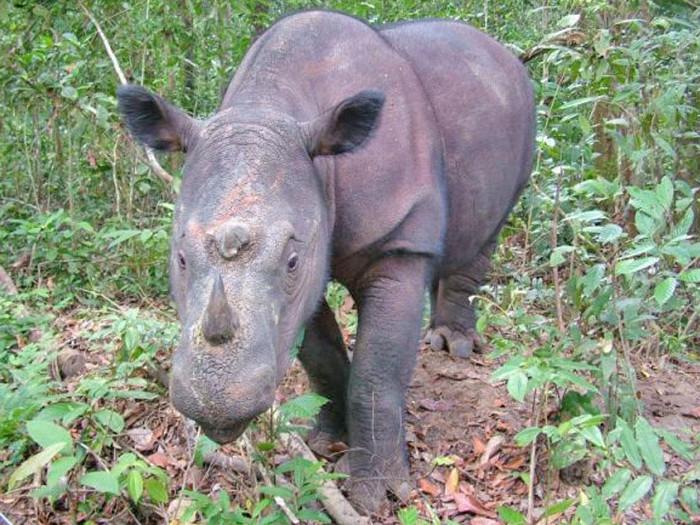 Tỉ lệ suy giảm các loài trên toàn hành tinh đang ở mức vượt ngưỡng an toàn