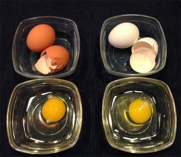Không có bằng chứng nào cho thấy màu vỏ trứng quyết định màu sắc lòng đỏ.