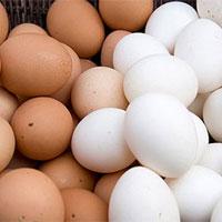 Vì sao trứng gà có hai màu và lý do thật bất ngờ