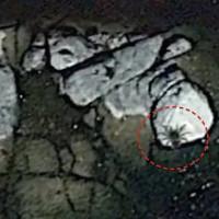 Google Earth phát hiện sinh vật khổng lồ ở ngoài khơi Mexico