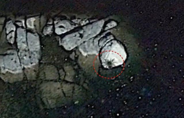 Con nhện khổng lồ do Google Earth phát hiện.