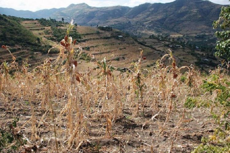 Tình trạng khô hạn do tác động của ENOS.