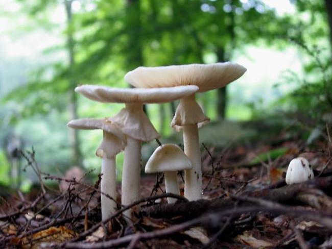 Còn lại 40% chất độc amatoxin của nấm sẽ được đẩy tới thận.