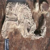 Khám phá bí ẩn nghĩa địa chó niên đại 2.000 năm