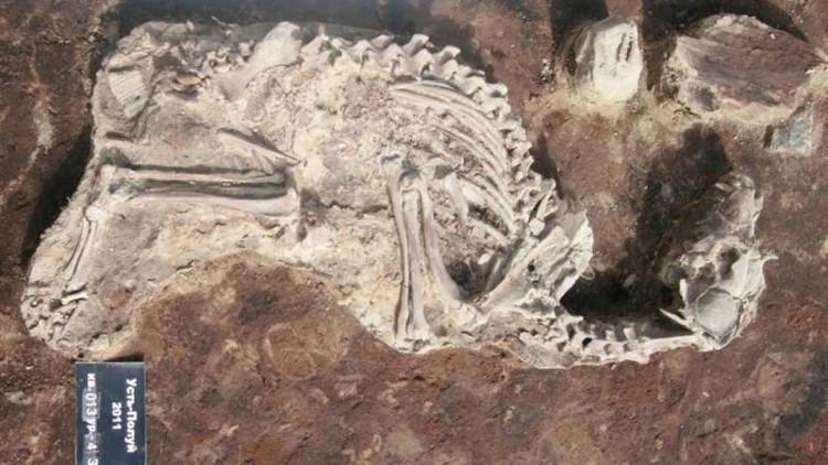 Bộ xương chó được tìm thấy ở nghĩa địa chó.