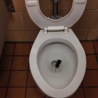 Chuột đột nhập vào nhà qua toilet như thế nào?