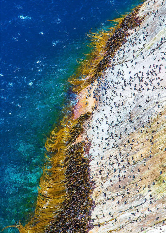 Chim cánh cụt đang di chuyển trên vách đá dựng đứng