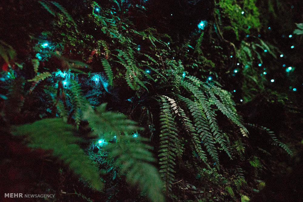Loài sâu phát sáng.