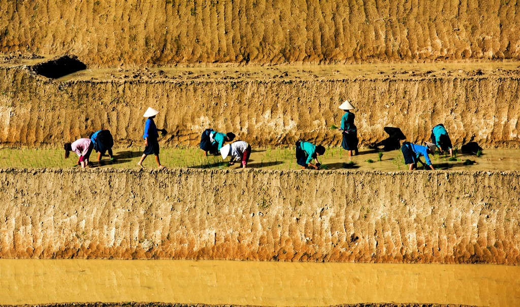 Khác với Mù Cang Chải hay Y Tý, ruộng bậc thang ở Hoàng Su Phì (Hà Giang) dường như có độ cao hơn, dốc hơn, chênh vênh hơn hẳn.