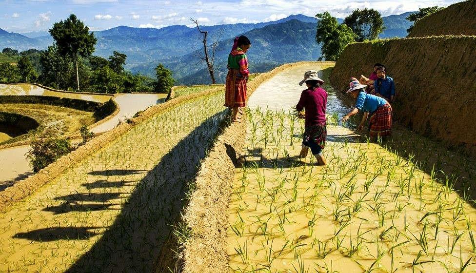 Những người Mông cấy lúa trên ruộng bậc thang