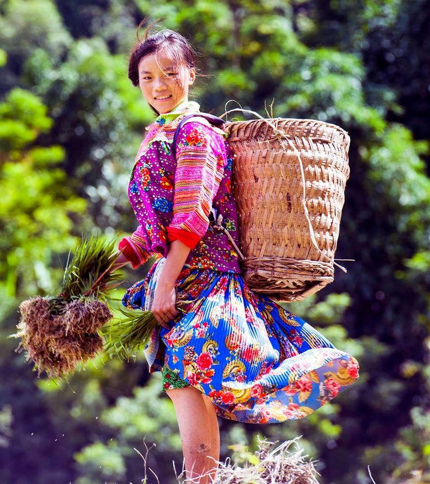 Nụ cười hồn hậu của những cô gái người Mông hòa trong nắng, gió, trong mạ non với chiếc gùi trên lưng, khiến cho con người ta thêm yêu đời, yêu cuộc sống, và bao muộn phiền dường như tan biến.