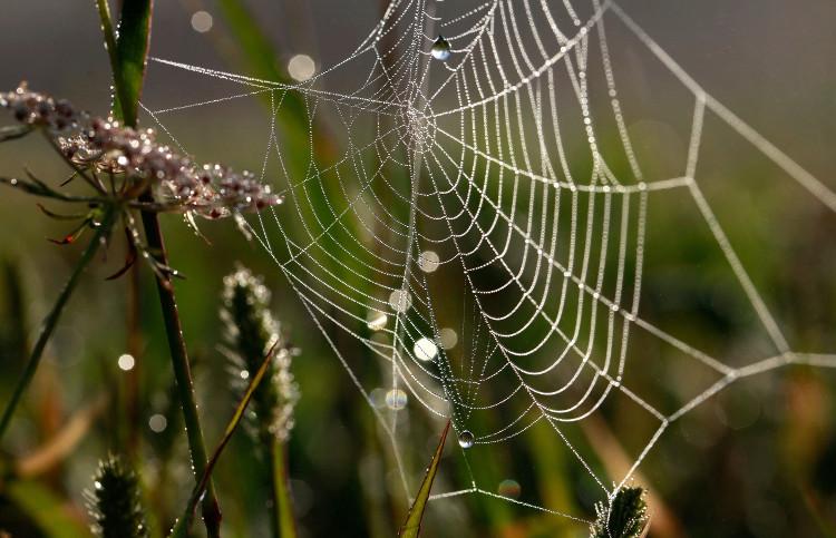 Lụa nhện được biết đến như một vật liệu siêu bền trong nền công nghiệp dệt may.