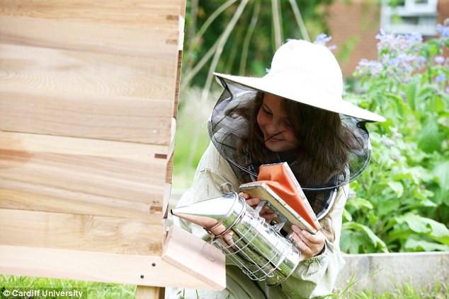 Học sinh ở Cardiff đang tham gia dự án nghiên cứu về ong.