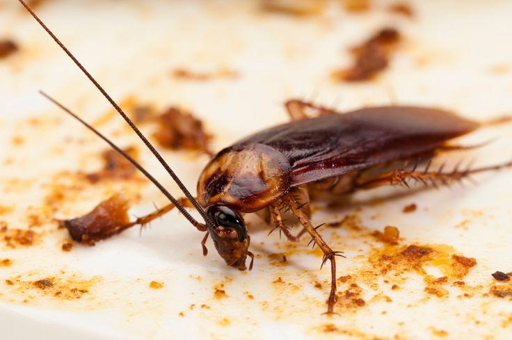 Trong tương lai, con người có thể phải tiêu thụ các loài côn trùng, chế phẩm từ côn trùng để ăn.