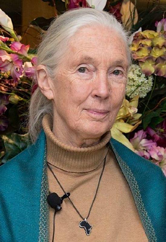 Nhà linh trưởng học Jane Goodall
