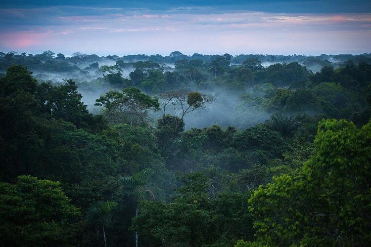 Rừng Amazon.