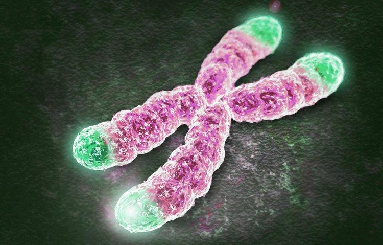 Telomere nằm ở các đầu của nhiễm sắc thể, bảo vệ NST trong quá trình phân bào.