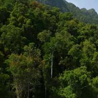 Chiêm ngưỡng cây nhân tạo, hấp thụ khí carbon hiệu quả gấp 1.000 lần cây xanh thật