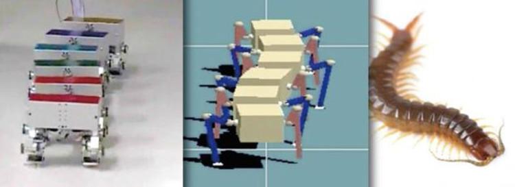 Các nhà khoa học Nhật Bản đã chế tạo thành công những con robot bắt chước loài rết.