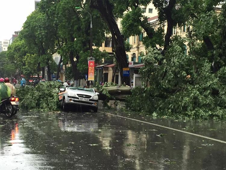 Một cây đổ đè nát ôtô trên phố Hai Bà Trưng.