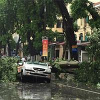 Cây đổ hàng loạt trên phố Hà Nội
