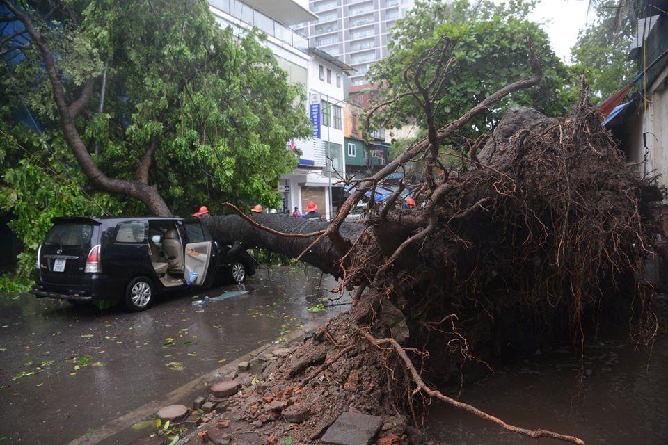 Mặc dù đã phanh gấp, nhưng thân cây vẫn đè ngang đầu xe đoạn nắp capo và kính trước.