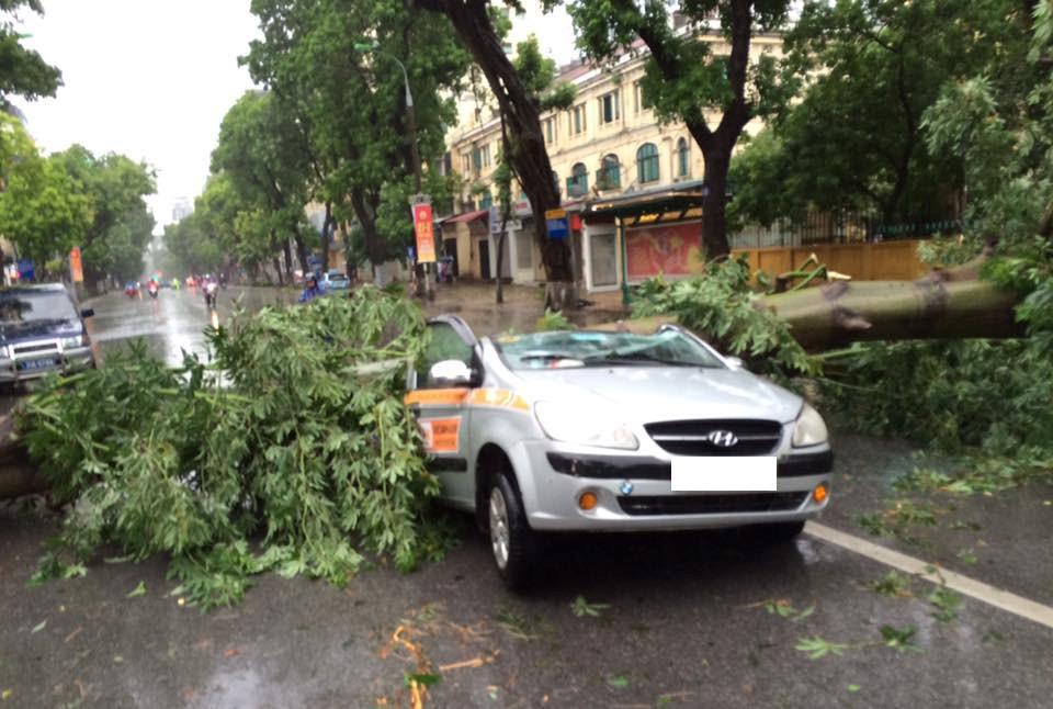 Trên phố Quang Trung (quận Hai Bà Trưng, Hà Nội), cây đổ làm một chiếc taxi bẹp rúm.