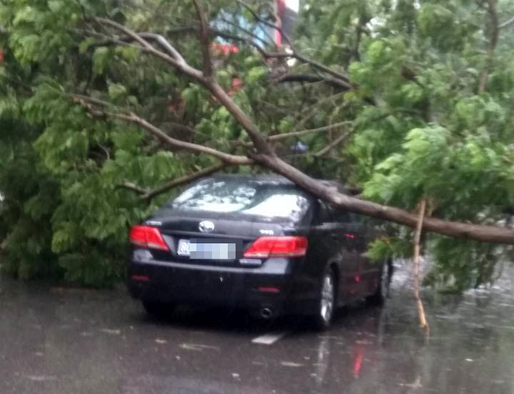 Trên phố Bà Triệu, cây đổ cũng khiến giao thông tắc nghẽn.