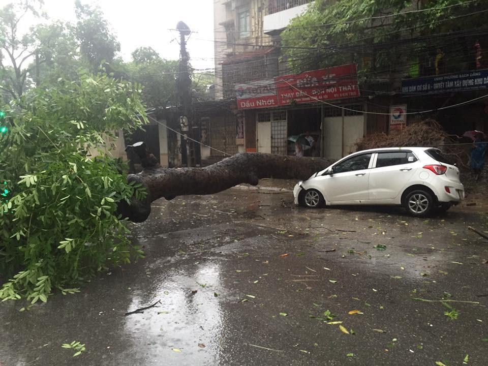 Một cây xà cừ vắt trước đầu mũi xe ôtô trên đường Trần Thánh Tông