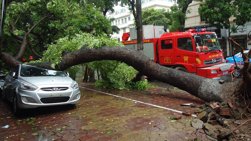 Chiếc Hyundai đậu trên vỉa hè khu tập thể 2F Quang Trung (phố Hai Bà Trưng) bị cây cổ thụ lớn đổ trúng
