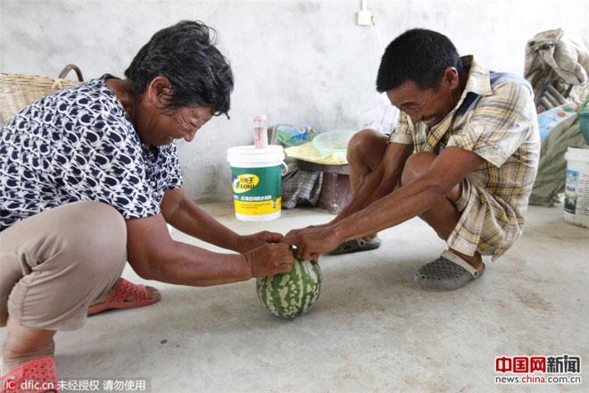 Vợ chồng ông dùng sức tách quả dưa ra nhưng không được.