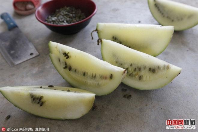 Dưa có ruột màu vàng nhạt, hạt màu xanh. Quả nặng nhất có trọng lượng 4,7kg, quả nhẹ nhất là 2,05kg.