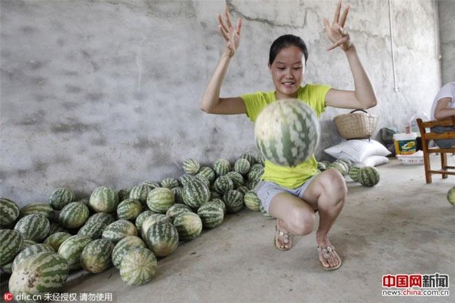Vợ ông Cung cho hay hạt giống dưa này được con gái bà mang từ Bắc Kinh về.