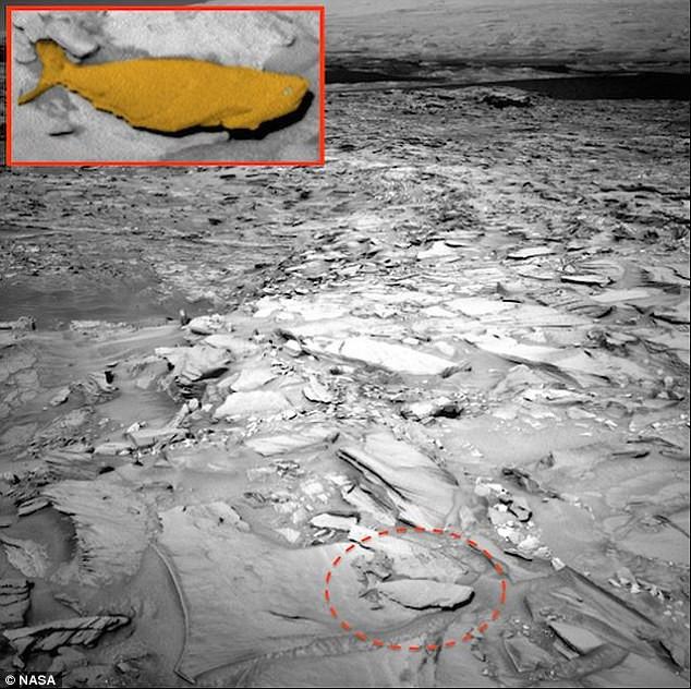 Hình ảnh được cho là cá hóa thạch lẫn giữa các lớp đất đá trên sao Hỏa.