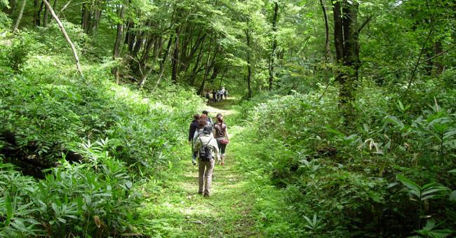Sức khỏe đời sống-Shinrin-yoku: Cách người Nhật dùng thiên nhiên chữa bệnh