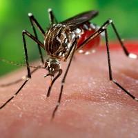 Nam thanh niên ở Phú Yên nhiễm virus Zika