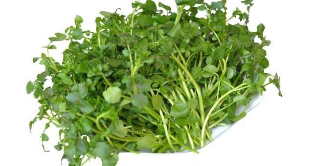 Sức khỏe đời sống-Ăn rau này mỗi ngày không còn lo ung thư