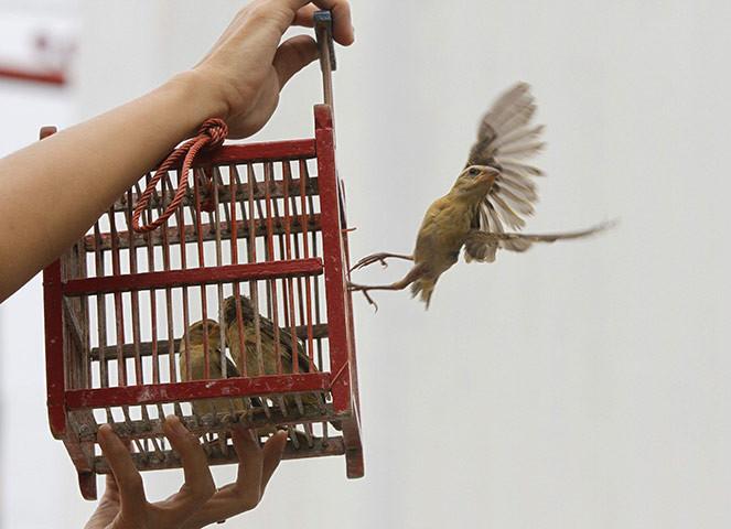 Hãy để các loài vật được tự do.
